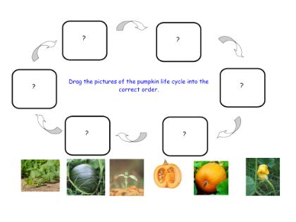Pumpkin life cycle clipart jpg free stock Pumpkin Life Cycle - Lessons - Tes Teach jpg free stock