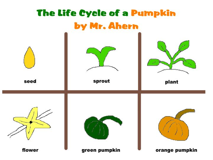 Pumpkin life cycle clipart picture library stock Pumpkin Life Cycle Clipart - Clipart Kid picture library stock
