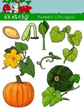 Pumpkin life cycle clipart vector Pumpkin life cycle clipart - ClipartFest vector