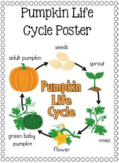 Pumpkin life cycle clipart image freeuse library Pumpkin life cycle clipart - ClipartFest image freeuse library
