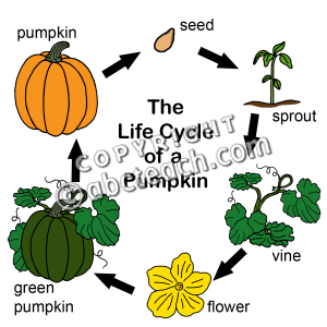Pumpkin life cycle clipart image Pumpkin Life Cycle - Lessons - Tes Teach image