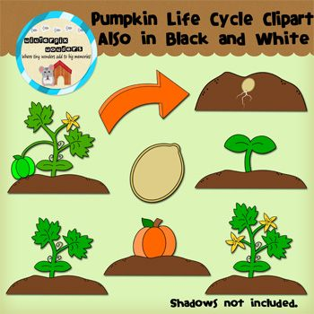 Pumpkin life cycle clipart graphic library Pumpkin Life Cycle Clipart - Clipart Kid graphic library