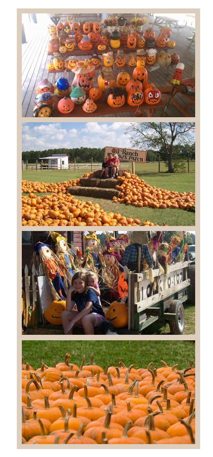 Pumpkin patch train tickets clipart picture freeuse library Oil Ranch - Pumpkin Patch Houston & Scarecrow Festival picture freeuse library