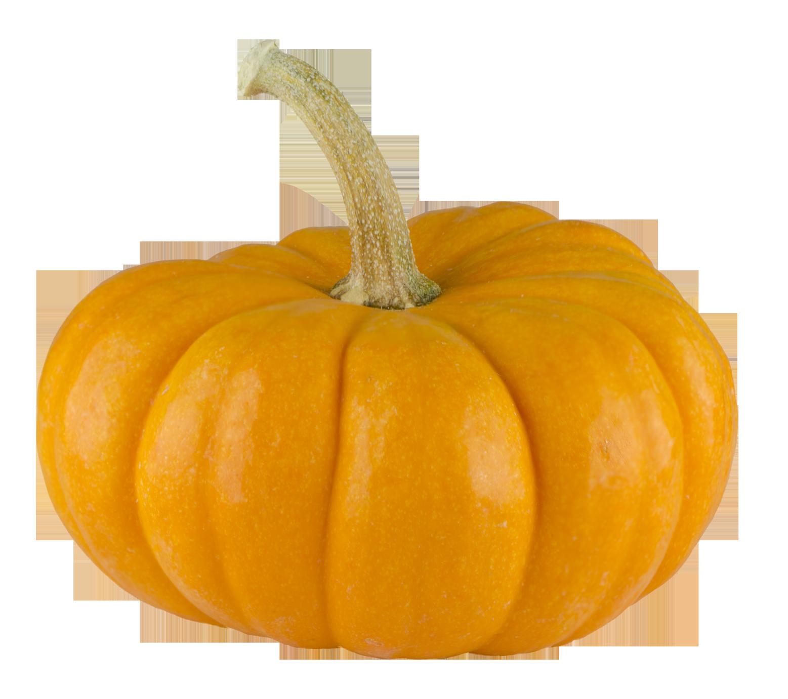 Pumpkin stem clipart image stock Squash clipart transparent background ~ Frames ~ Illustrations ~ HD ... image stock