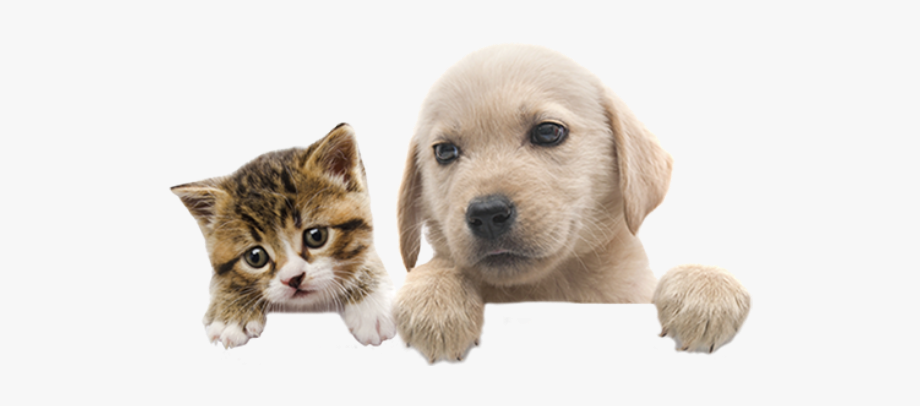 Puppy and 3 kitten on bed clipart png free pets #pet #puppy #kitten #lovepets #dog #dogs #cat - Cat ... png free