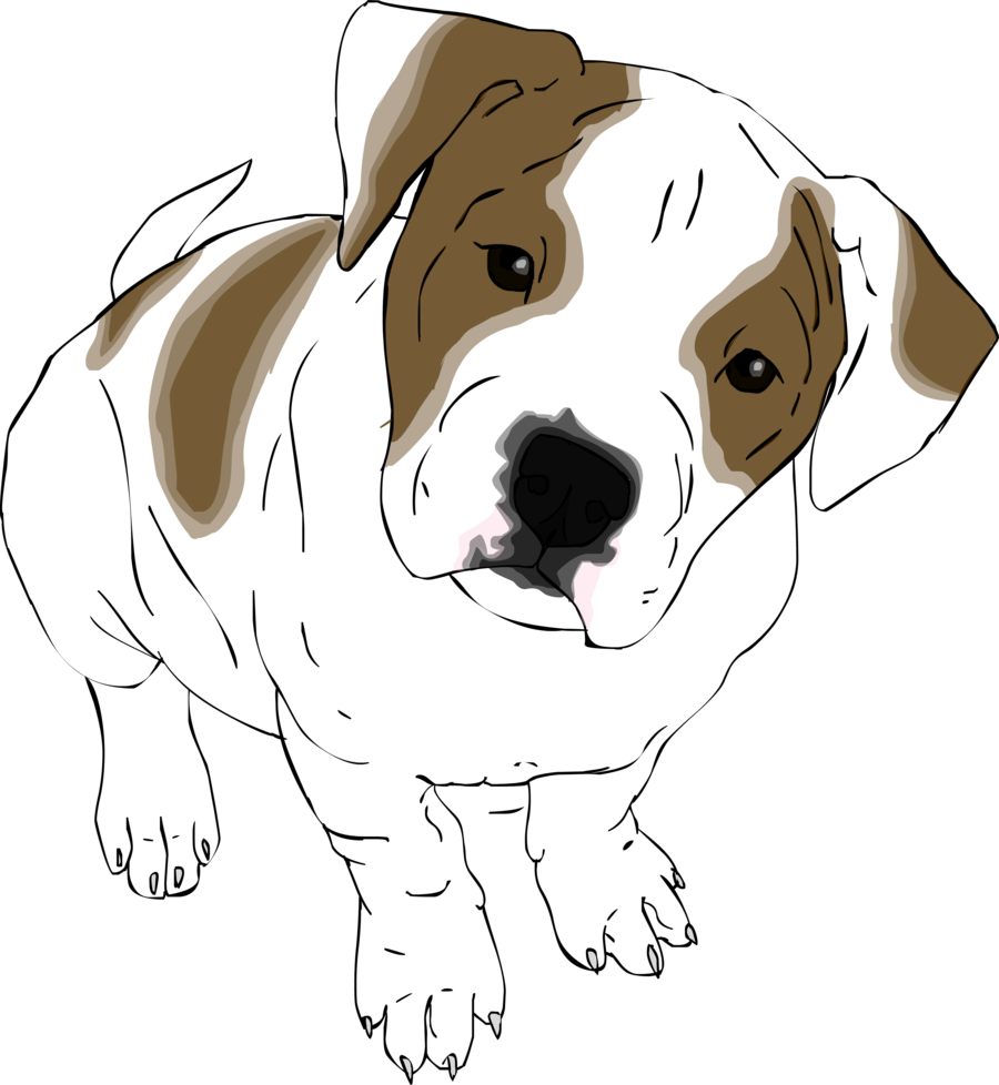 Puppy bull dog clipart vector free library American Bulldog Drawing at GetDrawings.com | Free for personal use ... vector free library
