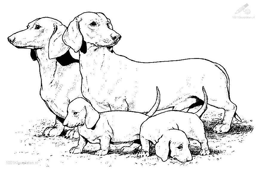 Puppy clipart 1 color svg black and white stock dachshund stock illustrations vectors amp clipart 1 469 stock ... svg black and white stock