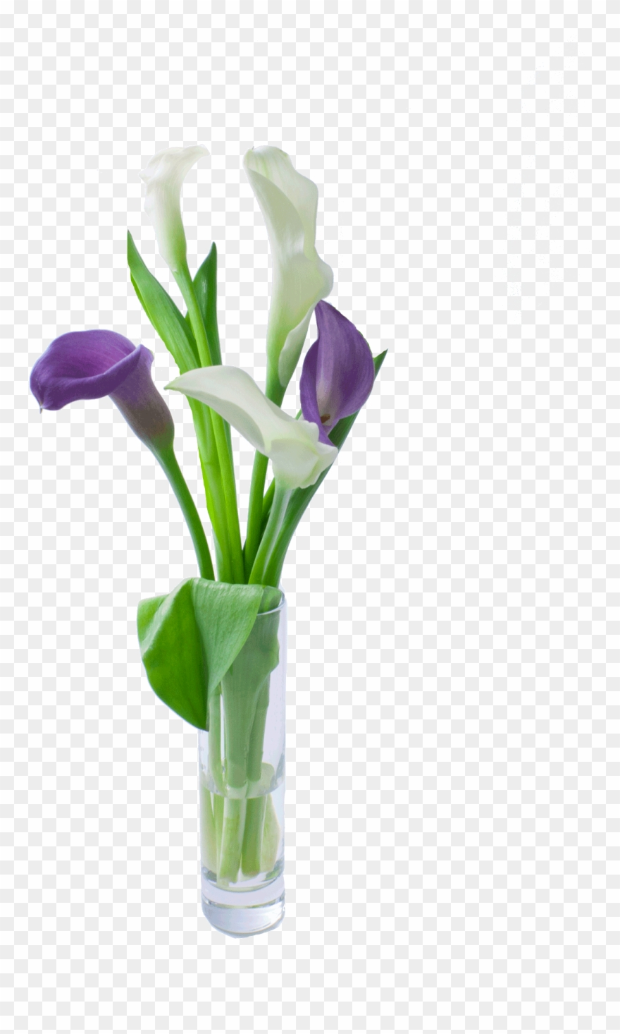 Purple calla lily clipart freeuse Grower Recommendations - Calla Lily Clipart (#1752476 ... freeuse