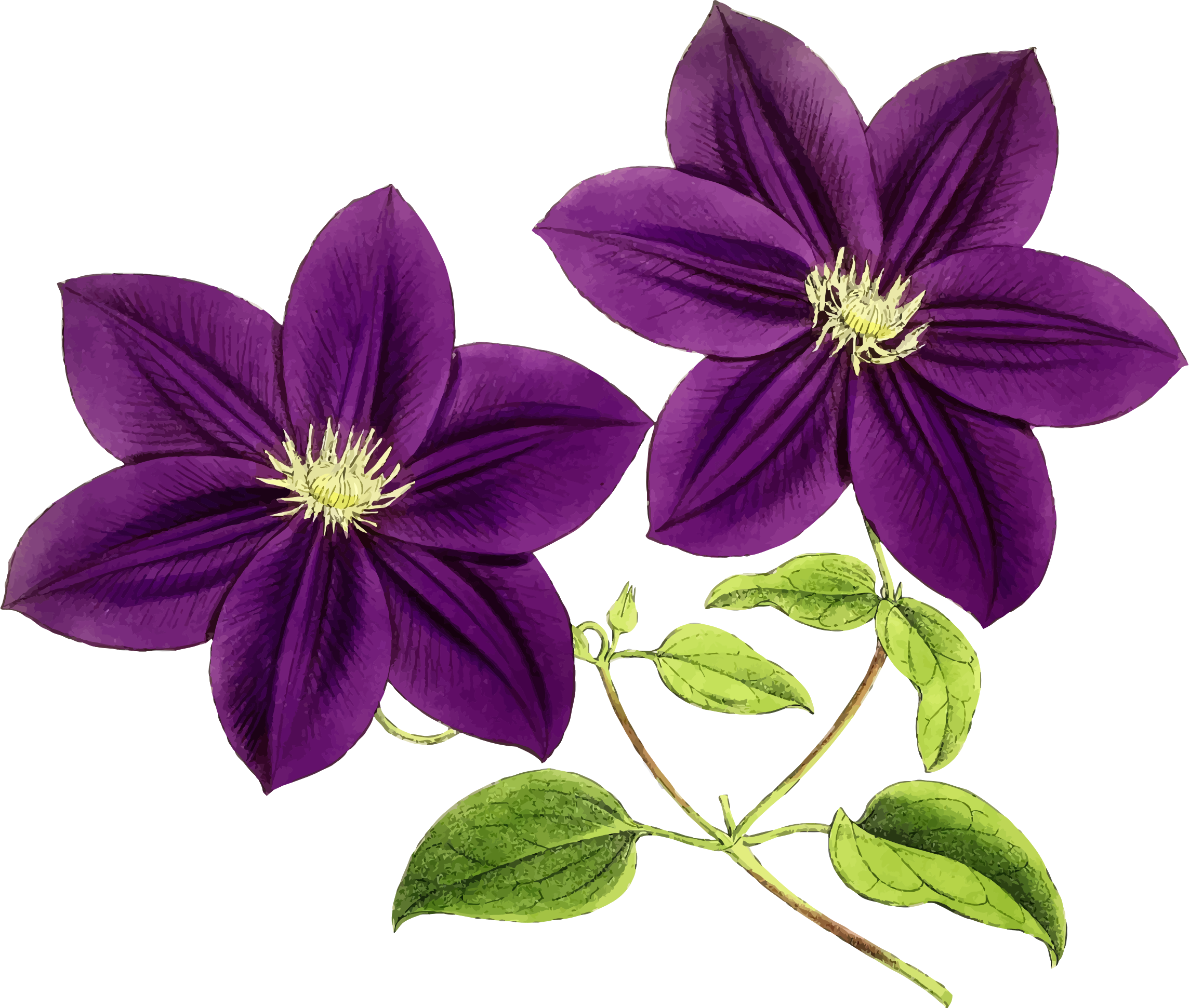 Purple clipart flower clip royalty free stock Clipart - Purple Flowers clip royalty free stock
