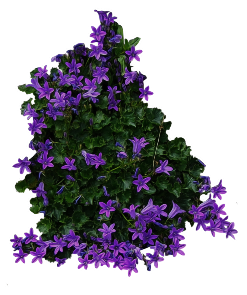 Purple flower clipart no background clip royalty free stock Bush with purple Flowers PNG Image - PurePNG   Free transparent CC0 ... clip royalty free stock