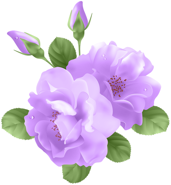 Purple flower clipart png png royalty free download Rose Purple Flower Clip art - purple flowers 556*600 transprent Png ... png royalty free download