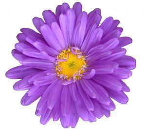 Purple flowers clip art clip royalty free download Purple Flowers Clipart & Purple Flowers Clip Art Images ... clip royalty free download