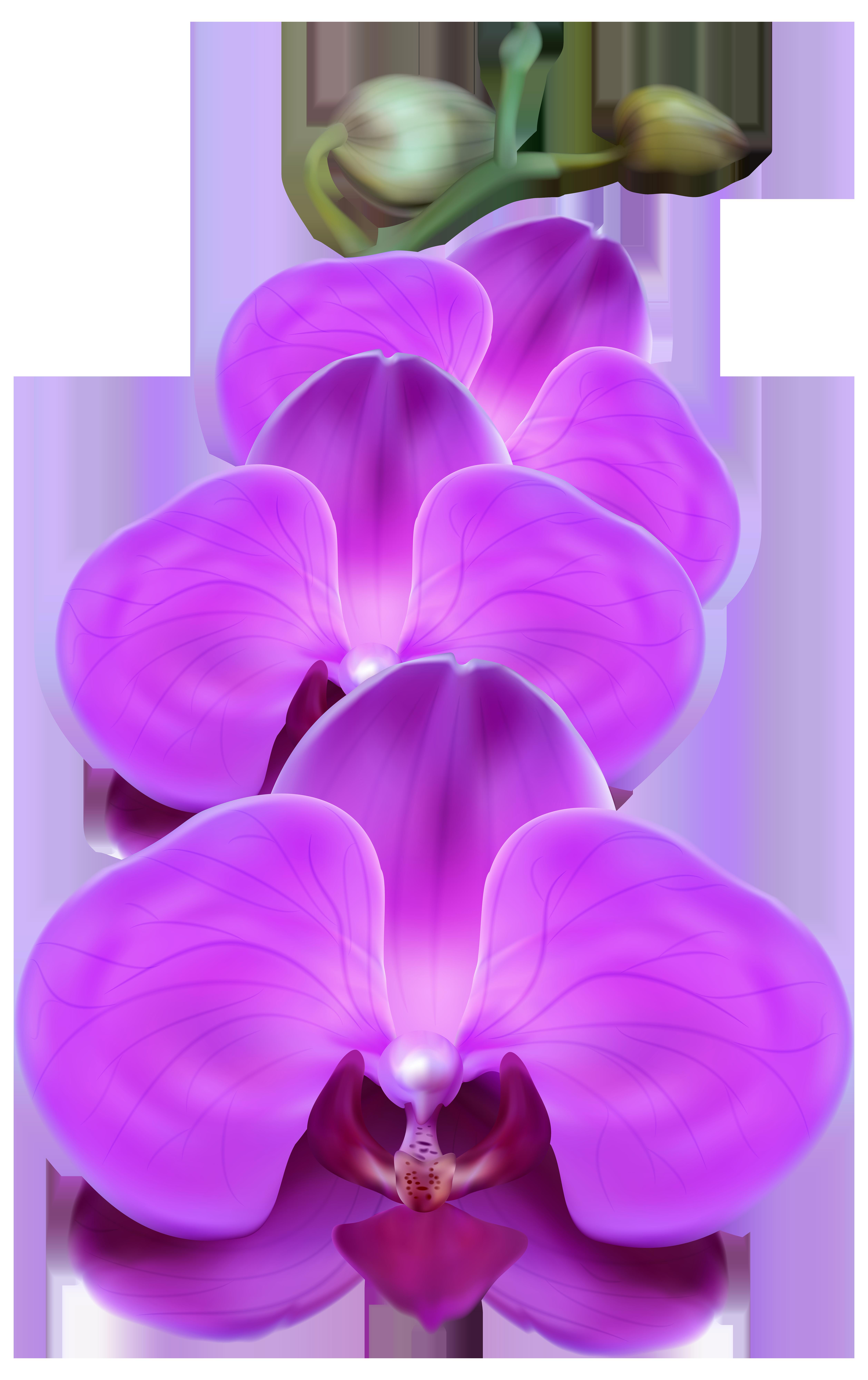 Purple orchid clipart svg freeuse download Purple Orchid PNG Transparent Clip Art Image   Gallery ... svg freeuse download