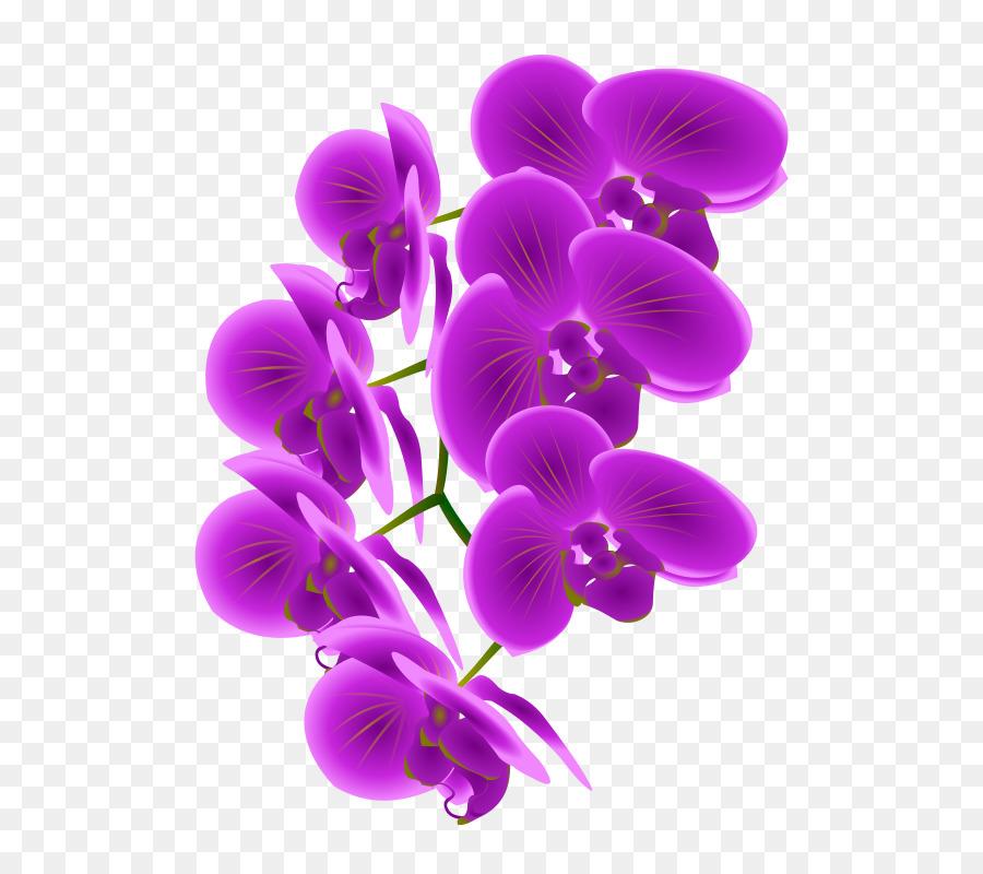 Purple orchid clipart clip art free Orchid Flower clipart - Purple, Flower, Plant, transparent ... clip art free