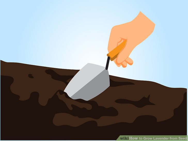 Put seed in dirt clipart
