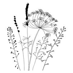 Queen anns lace cliparts svg transparent queen Anne\'s Lace Plant\