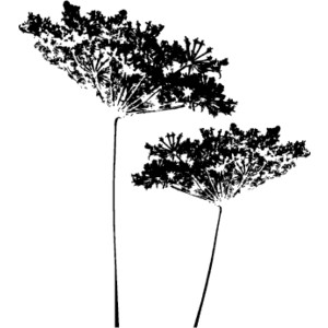 Queen anns lace cliparts clipart freeuse download Queen Annes Lace | Free Images at Clker.com - vector clip ... clipart freeuse download