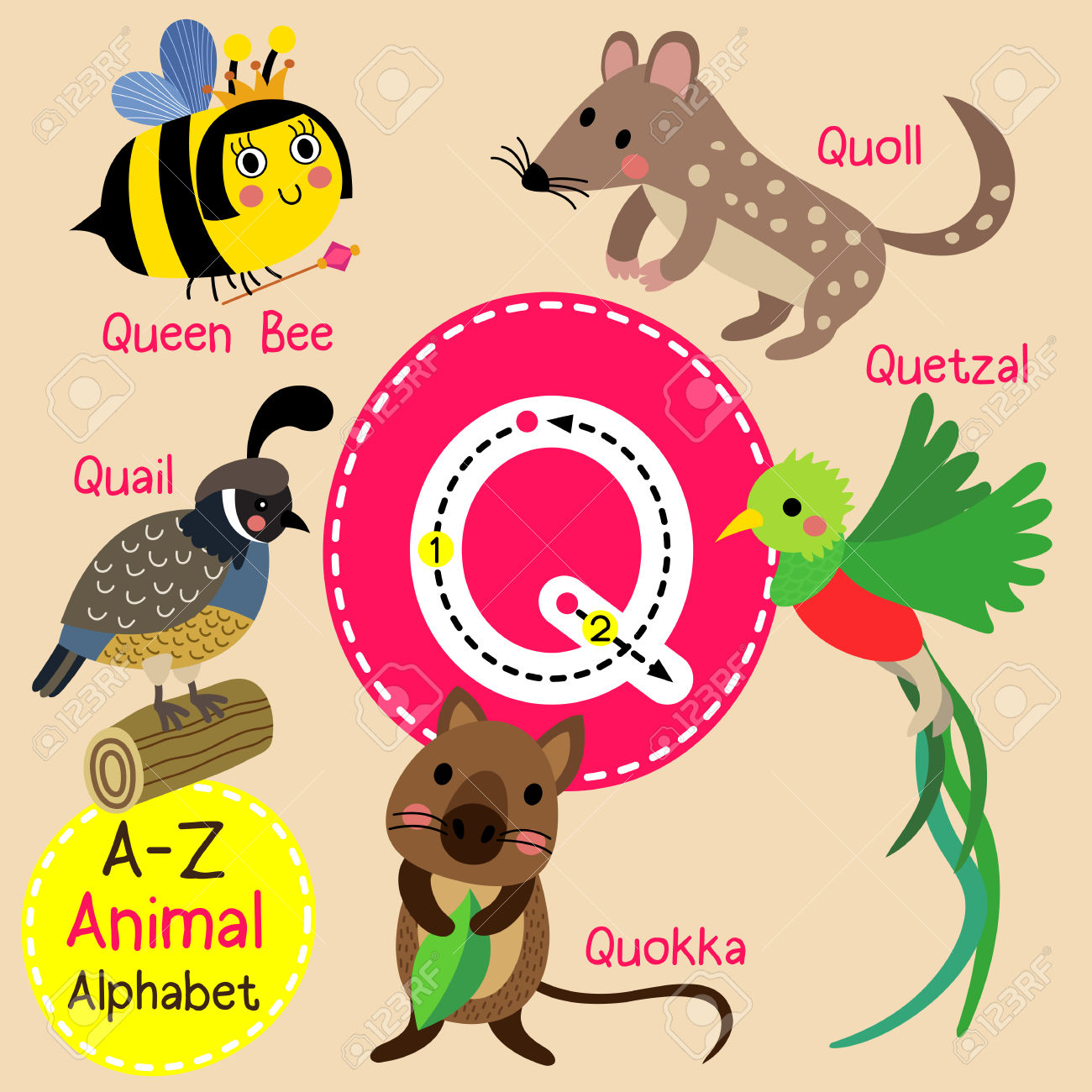 Queen of england cute clipart picture free download Q Letter Tracing. Quail. Queen Bee. Quetzal. Quokka. Quoll. Cute ... picture free download