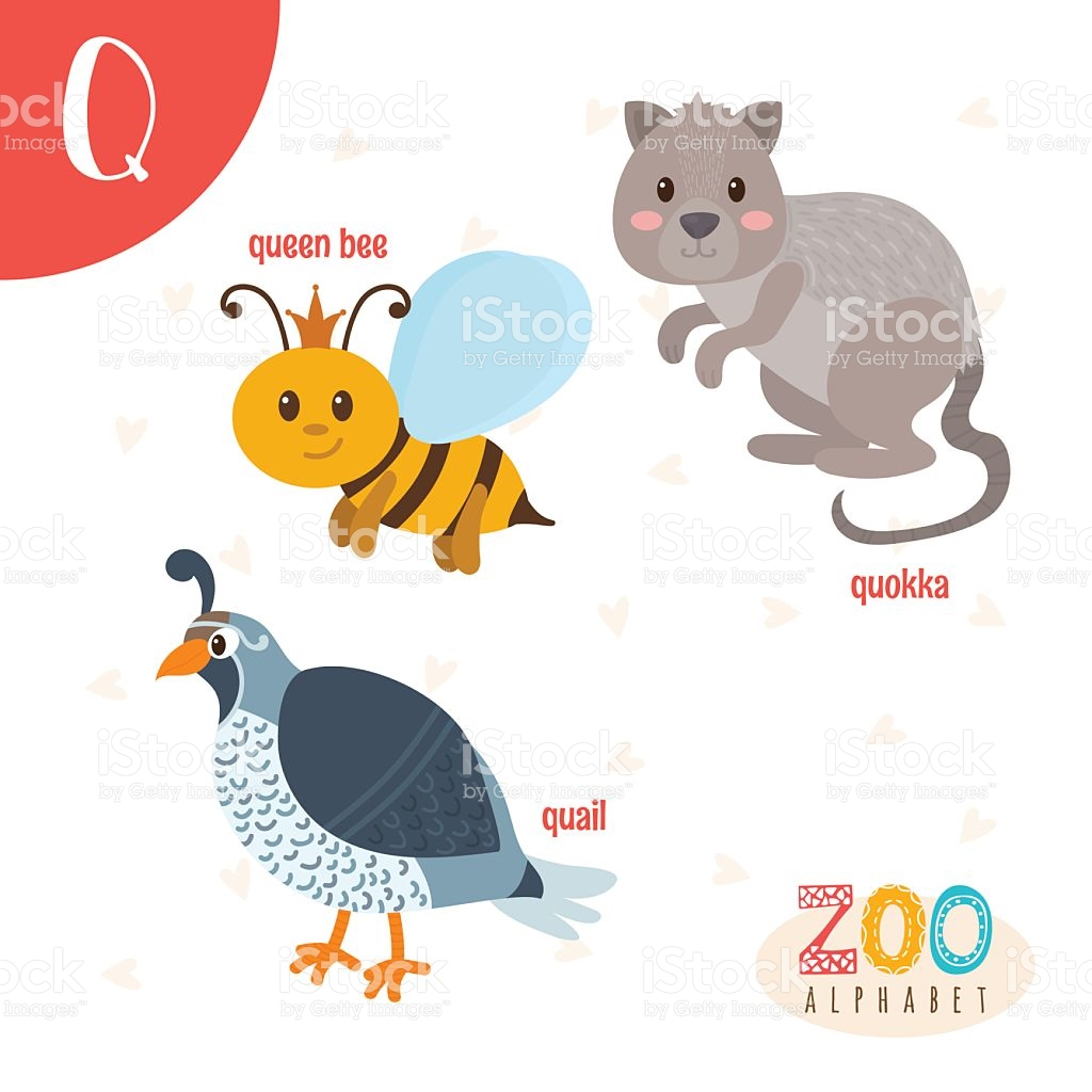 Queen of england cute clipart vector download Letter Q Cute Animals Funny Cartoon Animals In Vector stock vector ... vector download