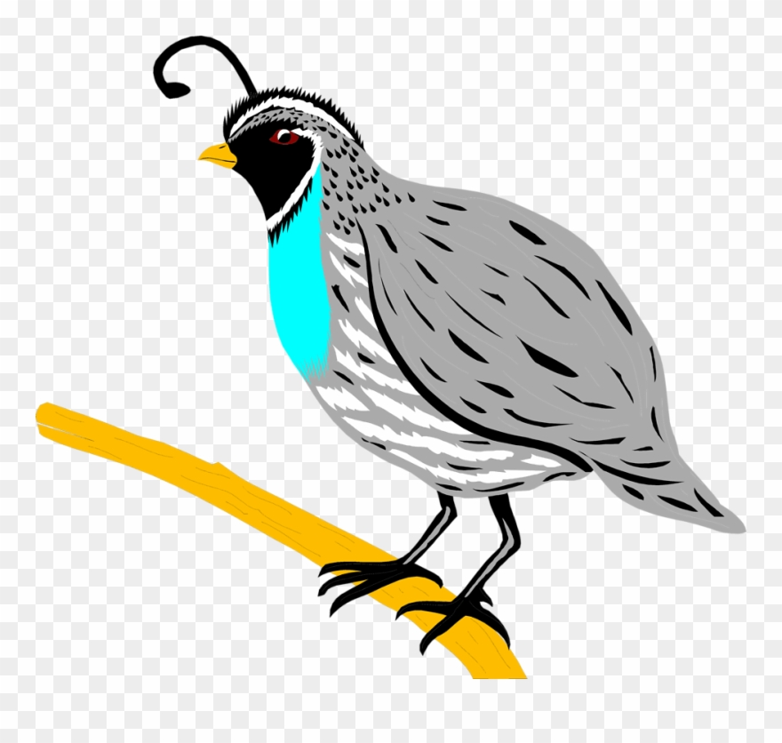 Quial clipart svg transparent library Clipart Of A Quail - Png Download (#220600) - PinClipart svg transparent library
