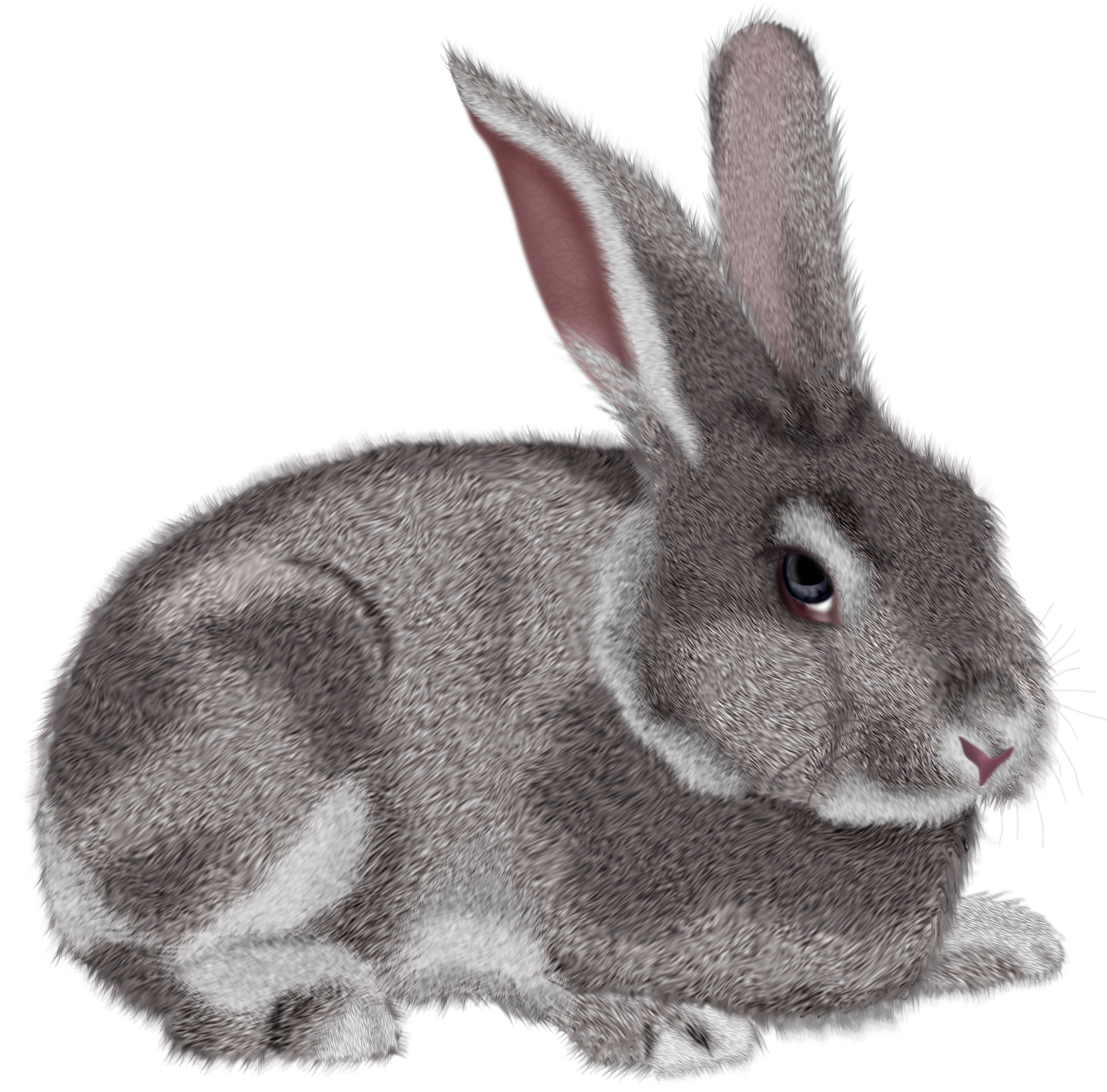 Rabbit with an apple clipart vector library library free clipart rabbit grey rabbit png clipart picture - Clip Art. Net vector library library