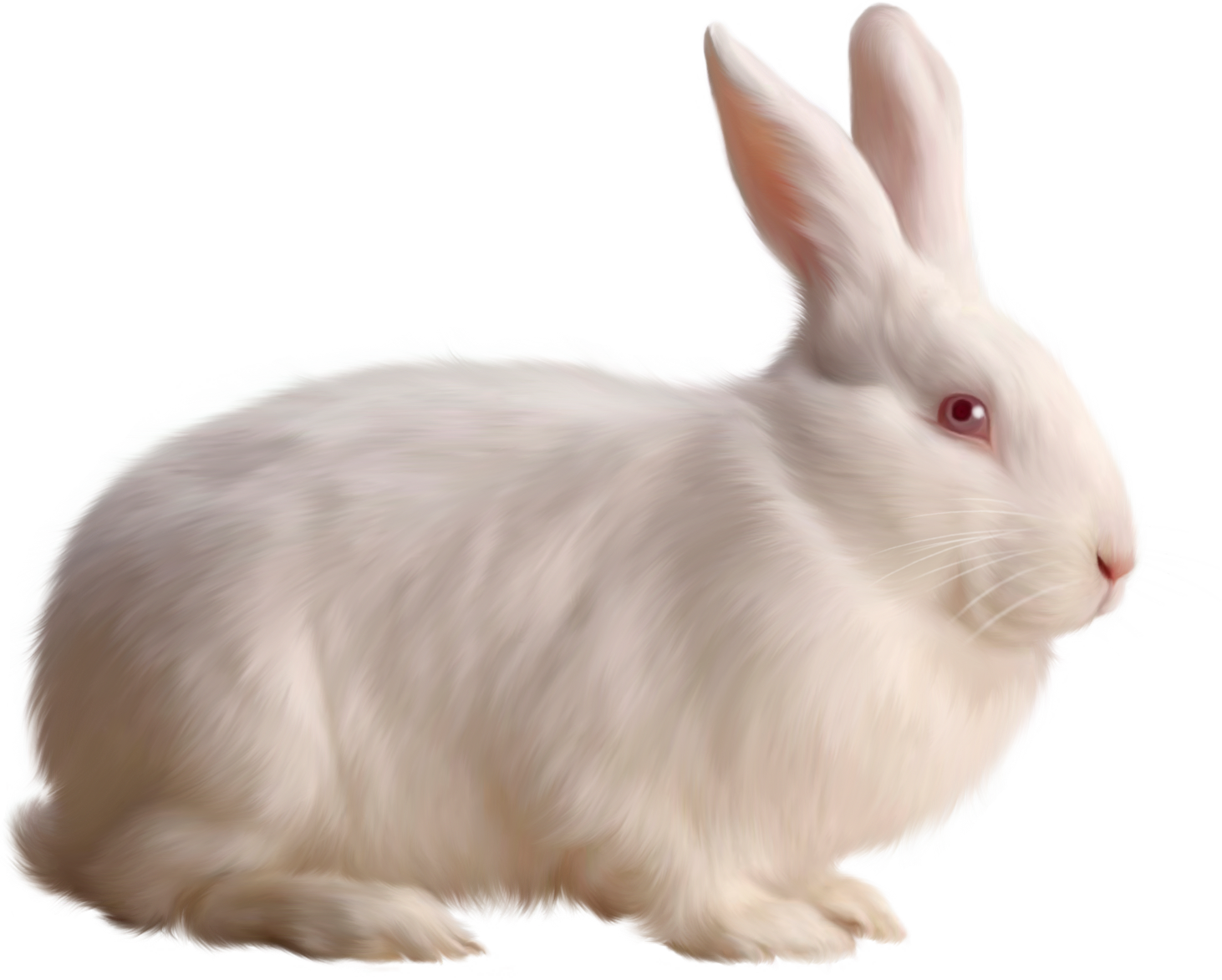 Rabbit with an apple clipart clip stock Rabbit PNG Picture | Web Icons PNG clip stock