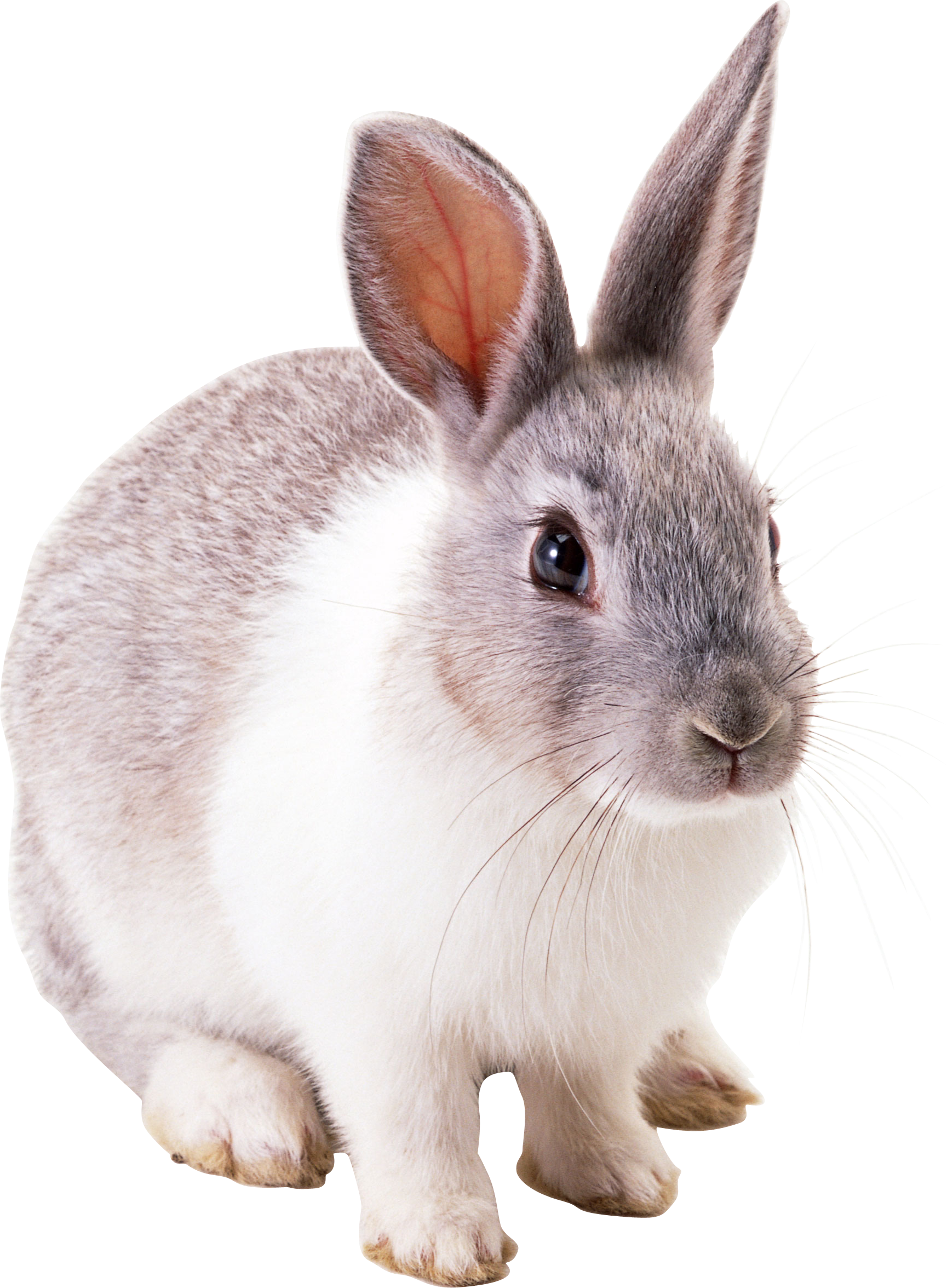Rabbit with an apple clipart png free stock Rabbit PNG Clipart | Web Icons PNG png free stock