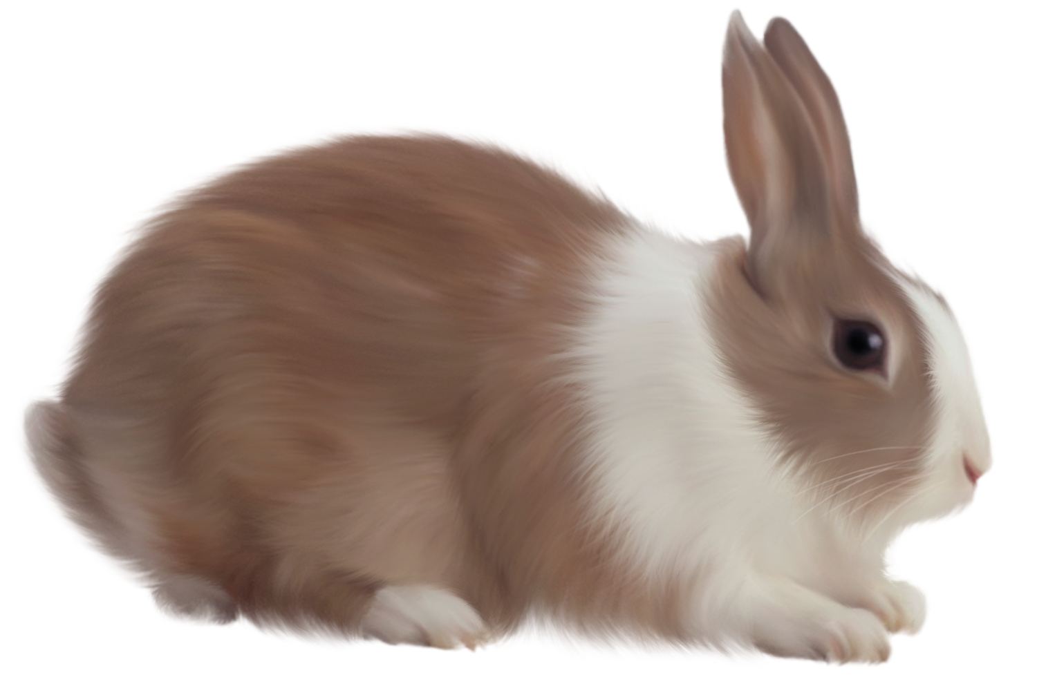Rabbit with an apple clipart jpg freeuse library Rabbit Seven | Isolated Stock Photo by noBACKS.com jpg freeuse library