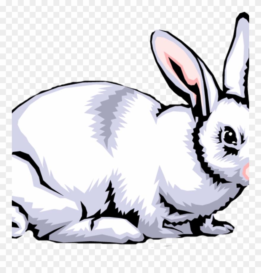 Rabbit Clipart Free Rabbit Clip Art Images Clipart - White ... jpg download