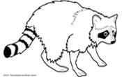 Raccoon Clipart Black And White | Free download best Raccoon ... banner royalty free