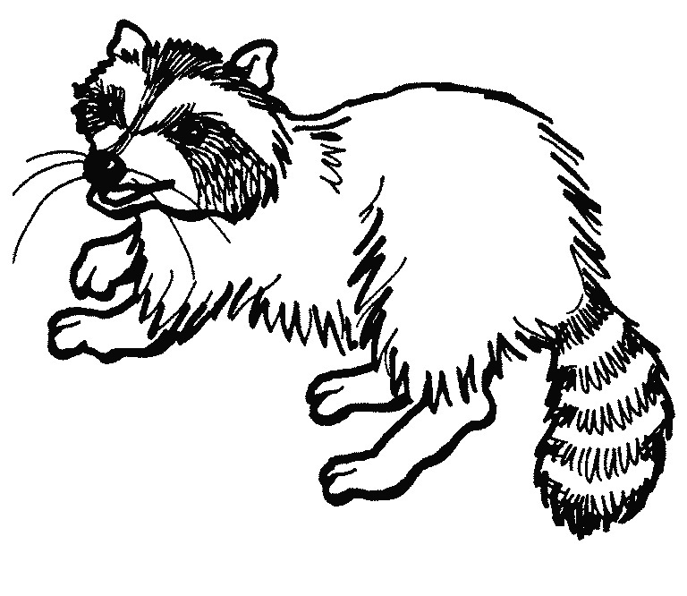 Raccoon clipart black and white 4 » Clipart Station clip freeuse