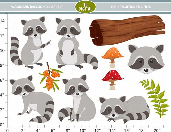 Woodland Raccoon Clipart Set - Animal Clipart - Woodland ... image transparent library