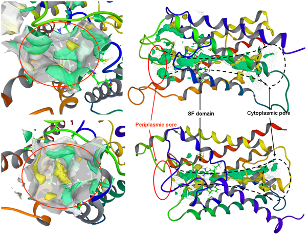 Raimbel in a gold of pote cliparts clip freeuse library PLOS ONE: Targeting Aquaporin Function: Potent Inhibition of ... clip freeuse library