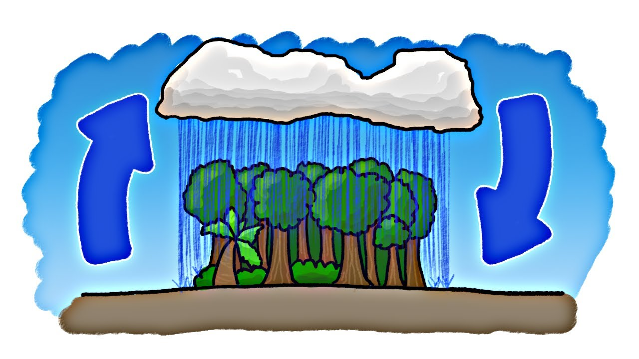 Rain clipart video clipart royalty free download Which Came First - The Rain or the Rainforest? clipart royalty free download