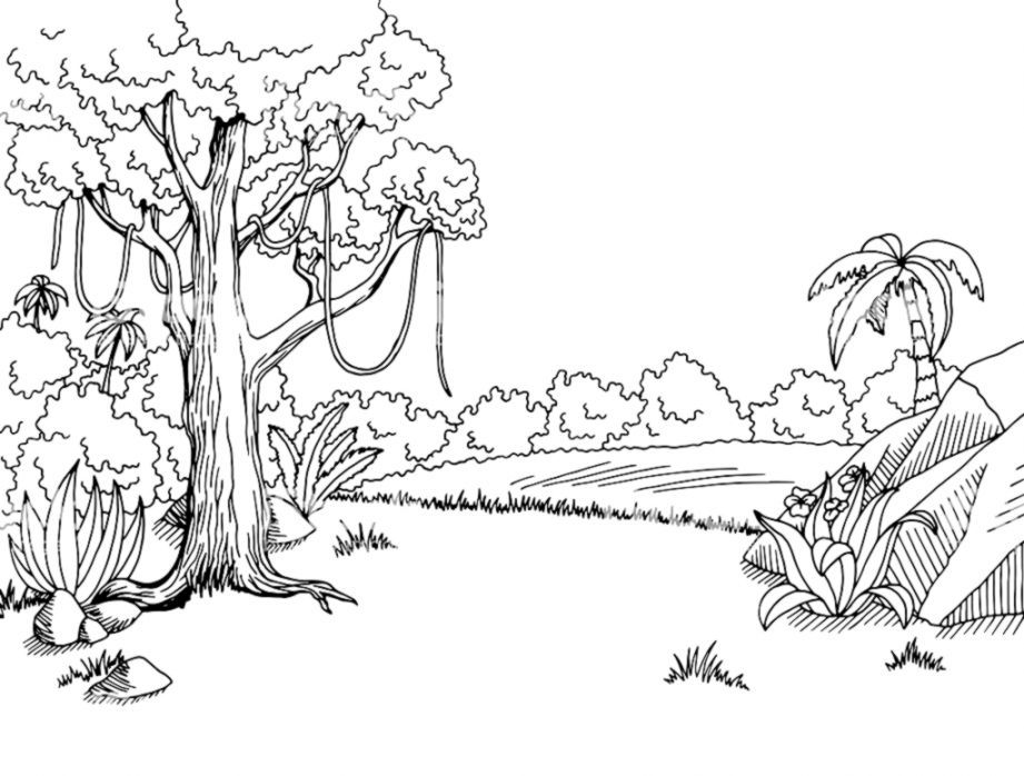 Rainforest Animals Clipart Black And White | Gandoss Wallpapers banner transparent download