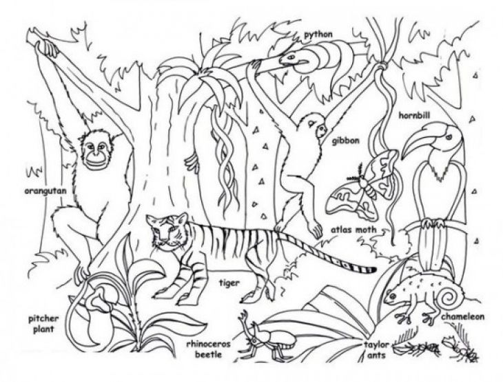 Jungle Clipart Black And White (81+ images in Collection) Page 1 svg