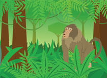 Search Results for Rainforest - Clip Art - Pictures ... picture library library