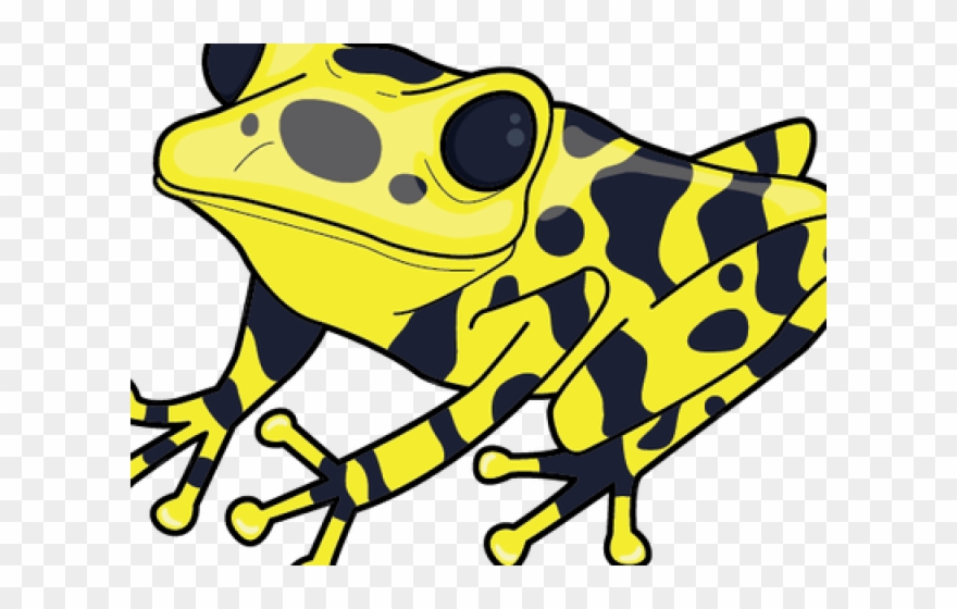 Yellow frog clipart banner freeuse Poison Dart Frog Clipart Spotted Frog - Poison Dart Frog ... banner freeuse
