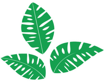Rainforest leaves clipart