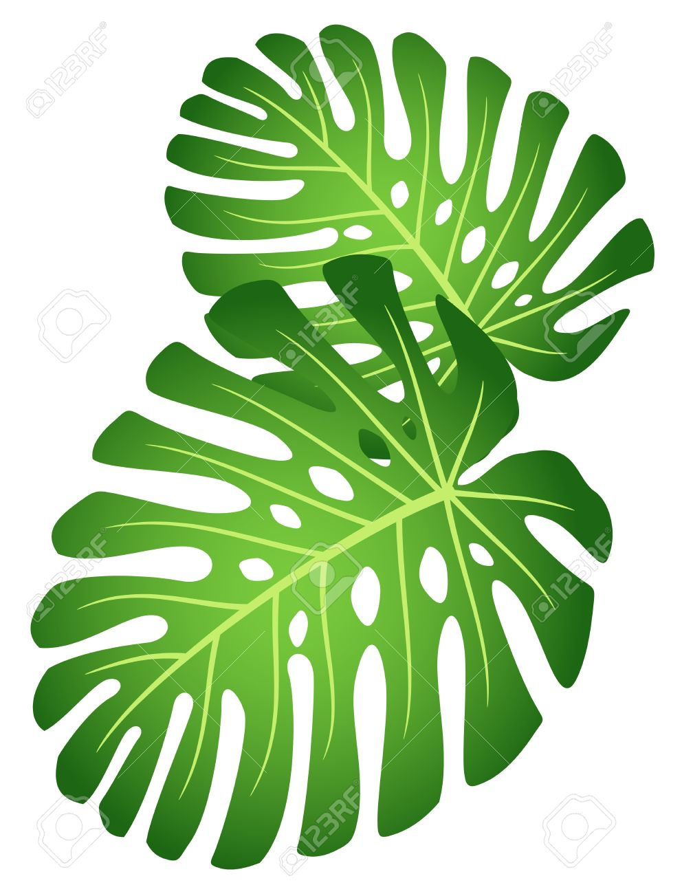 Rainforest leaves clipart clipart transparent library Rainforest leaves clipart » Clipart Station clipart transparent library