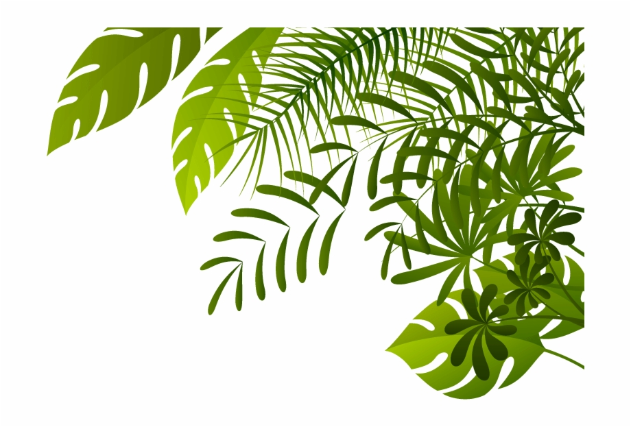Rainforest leaves clipart graphic royalty free library Jungle Png Image - Jungle Leaves Borders Png Free PNG Images ... graphic royalty free library