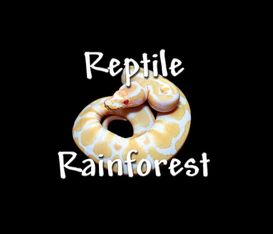 Rainforest sun clipart vector transparent download Reptile Rainforest vector transparent download