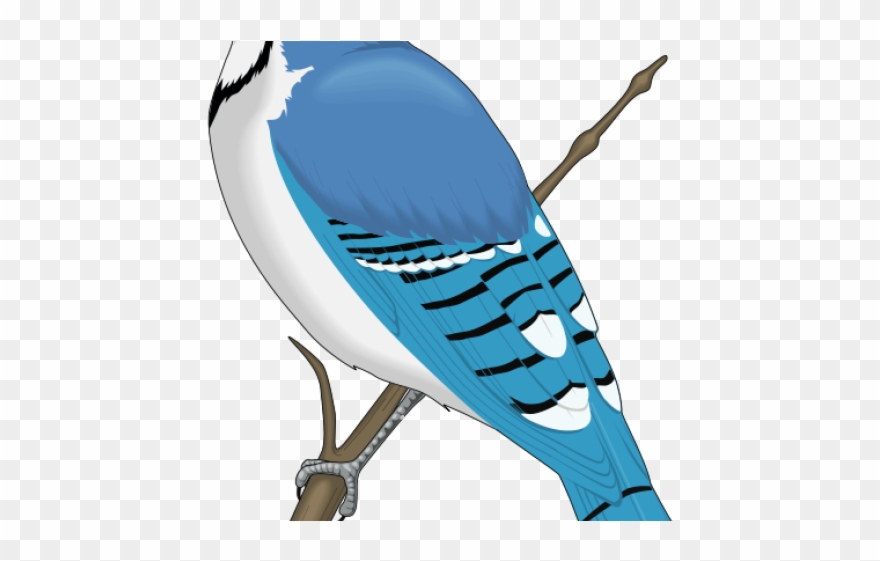 Rare clipart graphic stock Jay Clipart Rare Bird - Blue Jay Clip Art - Png Download ... graphic stock