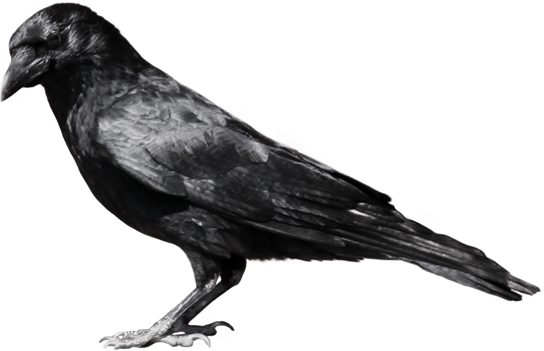 Raven in tree clipart jpg free download Black cartoon crow clipart - FamClipart | Wings & Wild Things ... jpg free download