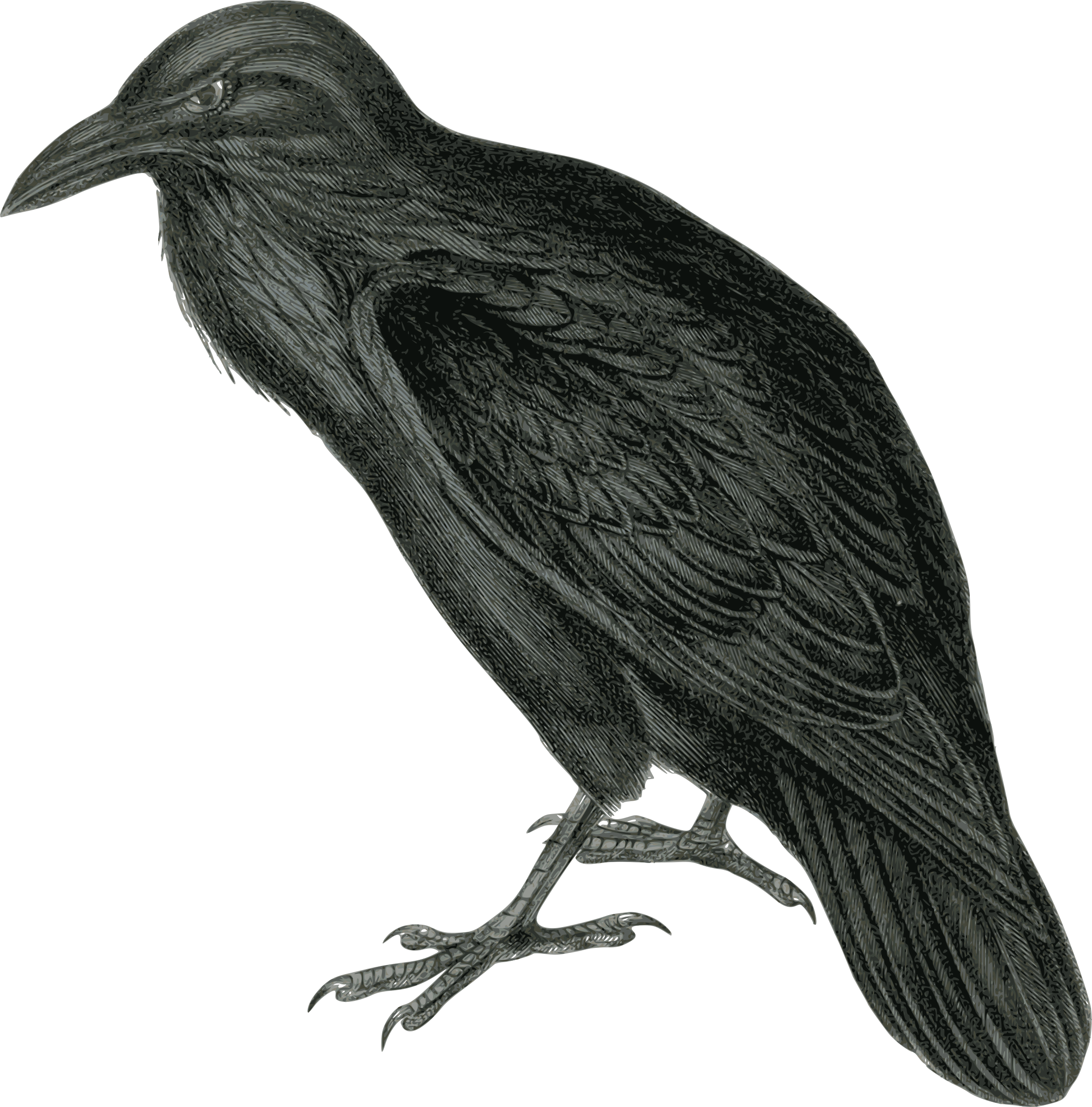 Raven vector clipart png library Raven Vector Clipart image - Free stock photo - Public ... png library