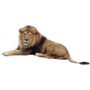 Real animal clipart clip art royalty free Free African Lion Cliparts, Download Free Clip Art, Free ... clip art royalty free