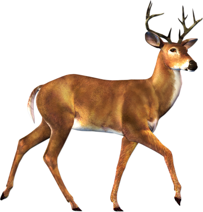 Real animal clipart graphic library stock Download Free png Real Animals Clipart Deer Cli - DLPNG.com graphic library stock