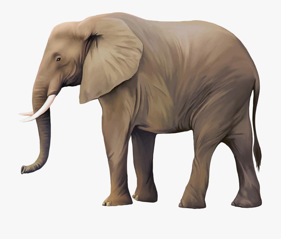 Real animal clipart image transparent stock Animal Illustrator Illustration Real Transprent - Realistic ... image transparent stock