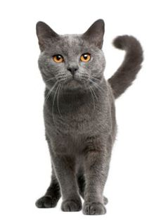 Real cat clipart picture free download Real cat clipart - ClipartFest picture free download