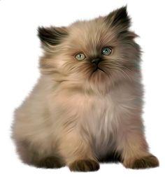Real cat clipart vector freeuse stock Cat Transparent PNG Clipart | gif mačka | Pinterest | Cats, Dibujo ... vector freeuse stock